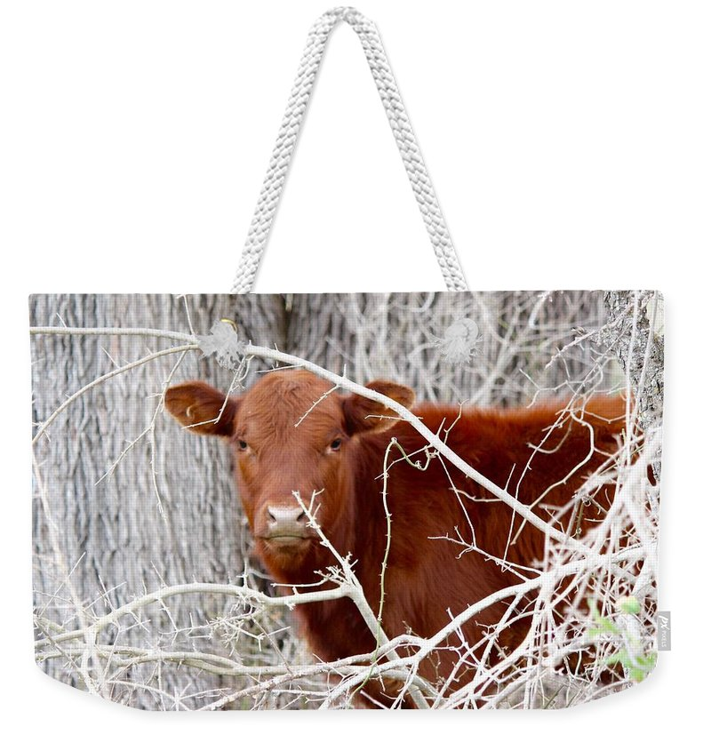 Red Weekender Tote Bag featuring the photograph Red Calf Hideaway by Jeanie Mann
