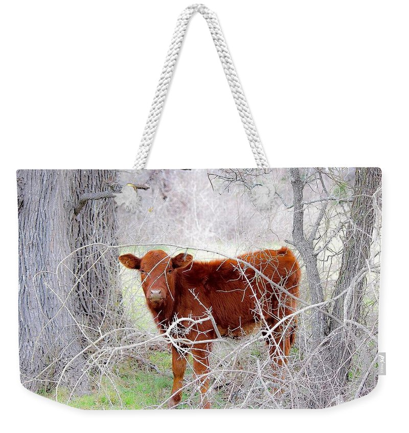 Red Weekender Tote Bag featuring the photograph Red Calf In Winter Brush by Jeanie Mann