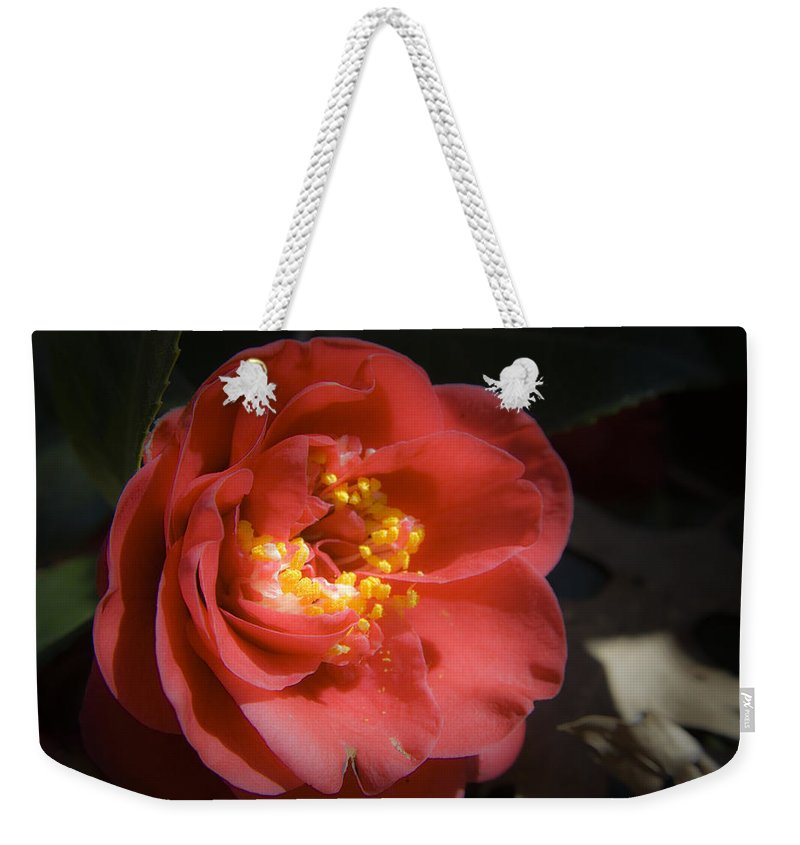Camellia Weekender Tote Bag featuring the photograph Red Camellia Bloom by Teresa Mucha