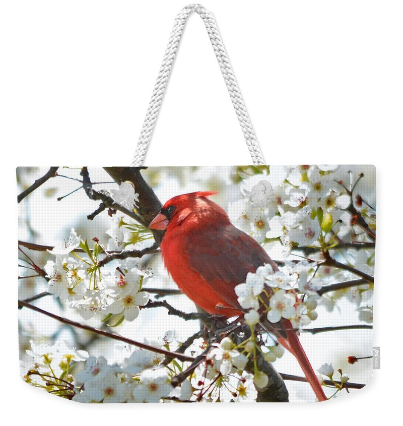 dc727690e0 Nature Weekender Tote Bag featuring the photograph Red Cardinal In Spring  Flowers by Nava Thompson
