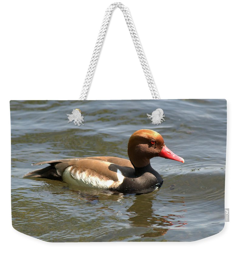 Pochard Weekender Tote Bag featuring the photograph Red-crested Pochard by Chris Day