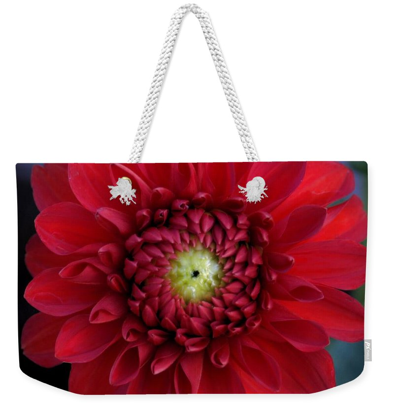 Dahlia Weekender Tote Bag featuring the photograph Red Dahlia Square by Patricia Strand