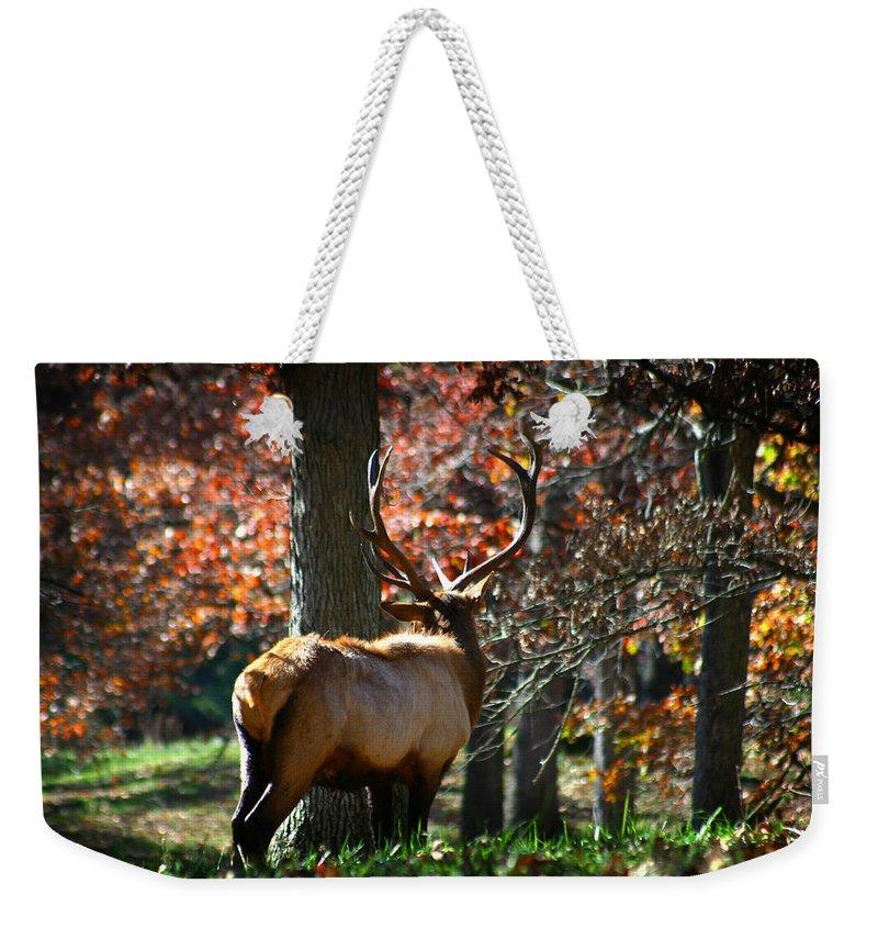 Elk Weekender Tote Bag featuring the photograph Red Elk by Anthony Jones
