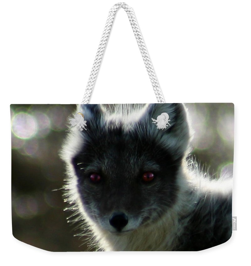 Arctic Fox Weekender Tote Bag featuring the photograph Red Eyes by Anthony Jones