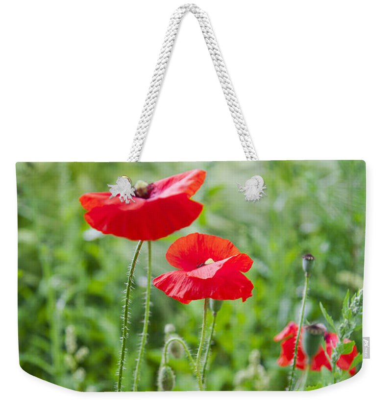 Wall Weekender Tote Bag featuring the photograph Red Field Poppies by Sophie McAulay