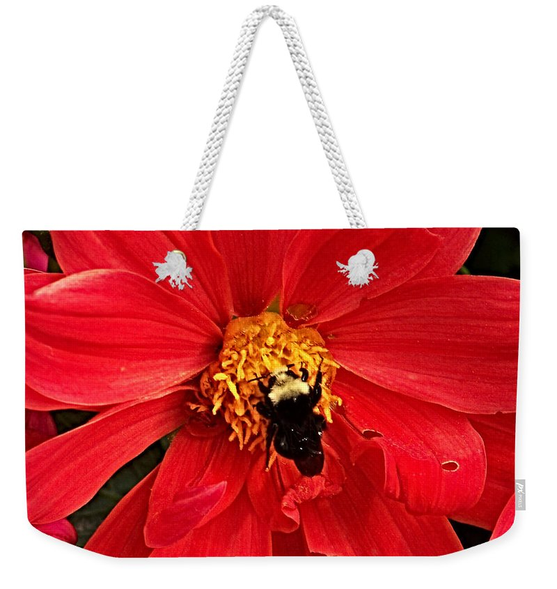 Flower Weekender Tote Bag featuring the photograph Red Flower And Bee by Anthony Jones