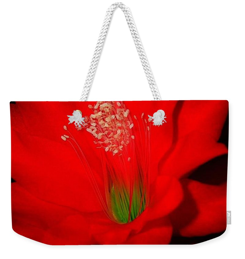 Garden Weekender Tote Bag featuring the photograph Red Flower For You by Juergen Weiss