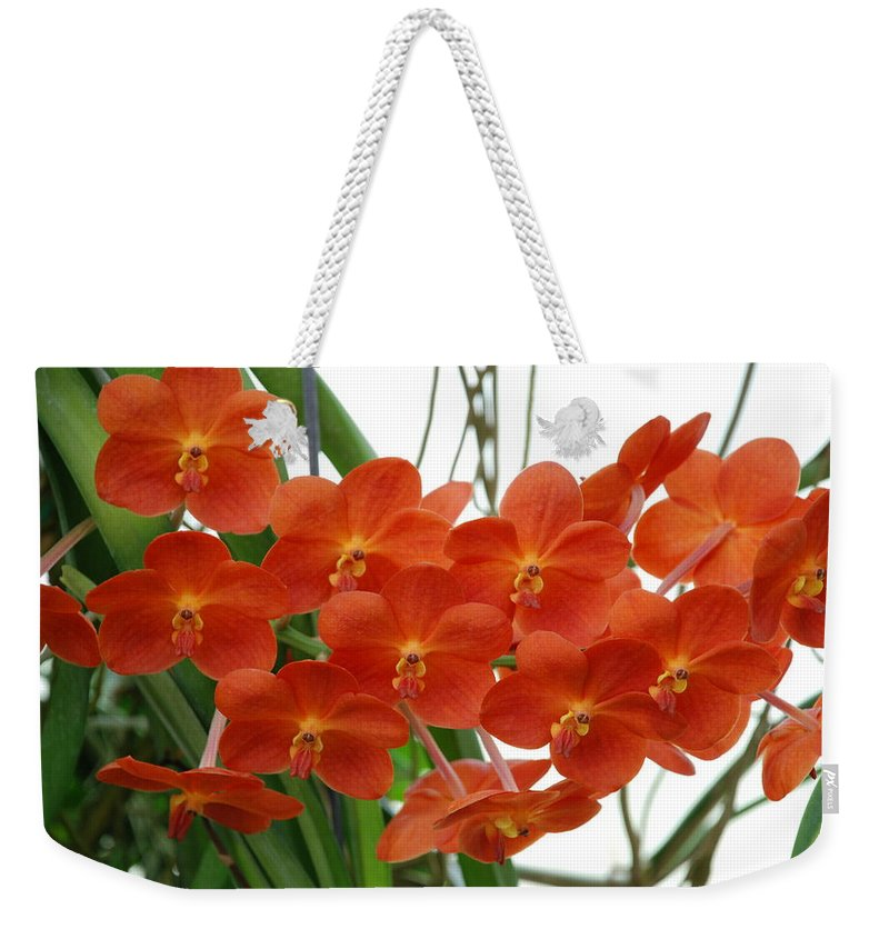 Macro Weekender Tote Bag featuring the photograph Red Flowers by Rob Hans