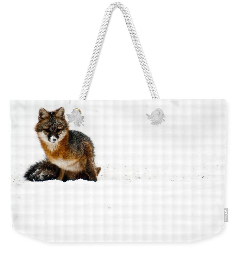 Fox Weekender Tote Bag featuring the photograph Red Fox In The Snow by Douglas Barnett