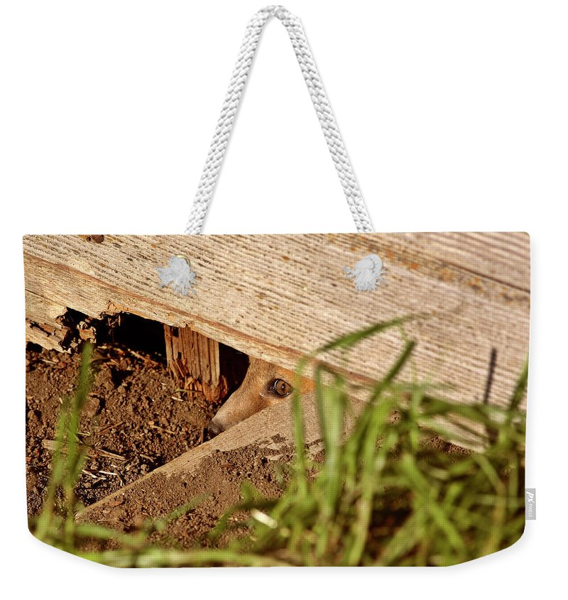 Red Fox Weekender Tote Bag featuring the digital art Red Fox Kit Peaking Out From Den Under Old Granary by Mark Duffy