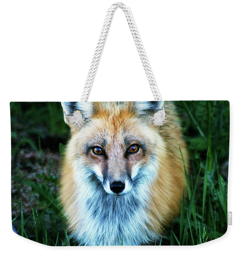 Fox Weekender Tote Bag featuring the photograph Red Fox by Mark Ivins