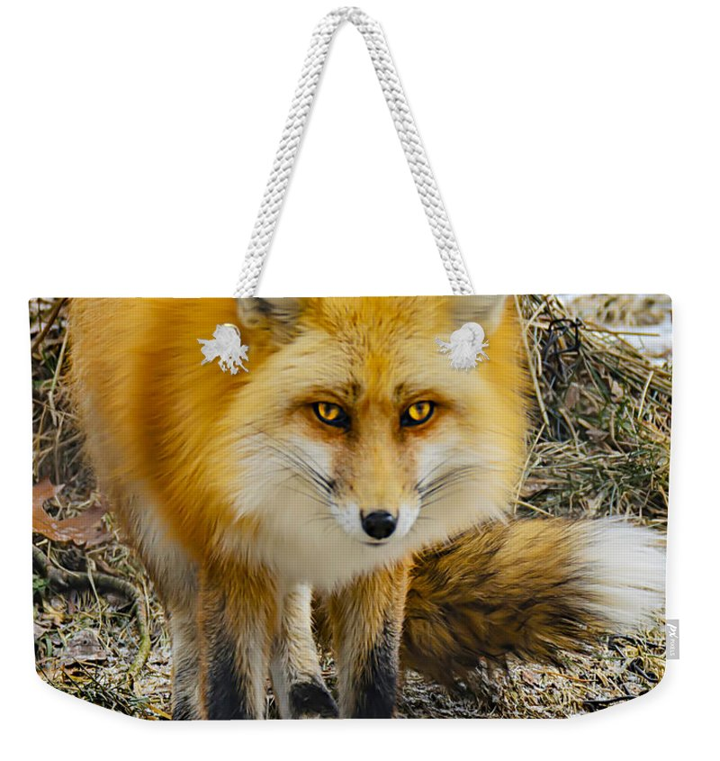 Nature Wear Weekender Tote Bag featuring the photograph Red Fox Nature Girl by LeeAnn McLaneGoetz McLaneGoetzStudioLLCcom