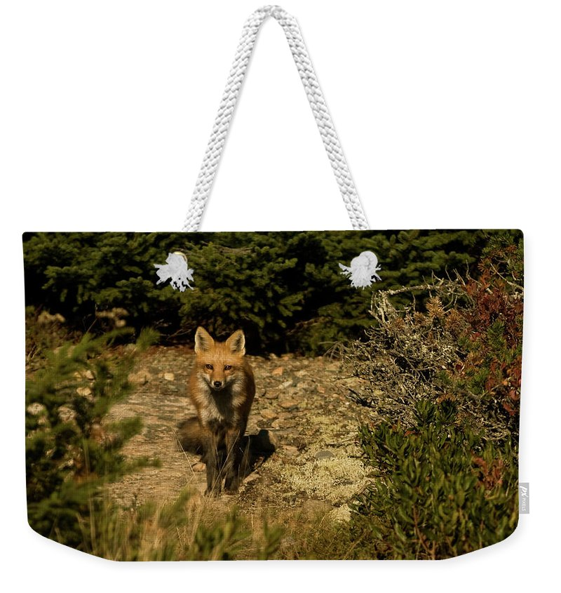 red Fox Weekender Tote Bag featuring the photograph Red Fox by Paul Mangold