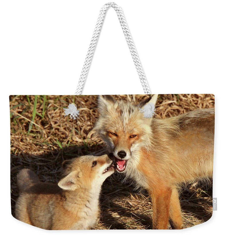 Red Fox Weekender Tote Bag featuring the digital art Red Fox Vixen With Pup On Hecla Island In Manitoba by Mark Duffy