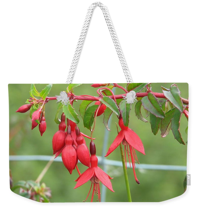 Fresia Weekender Tote Bag featuring the photograph Red Fresia by Kelly Mezzapelle