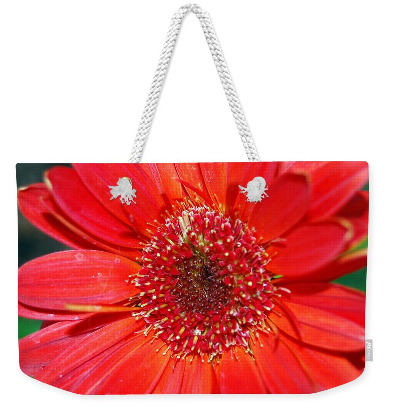 Gerber Weekender Tote Bag featuring the photograph Red Gerber Daisy by Amy Fose