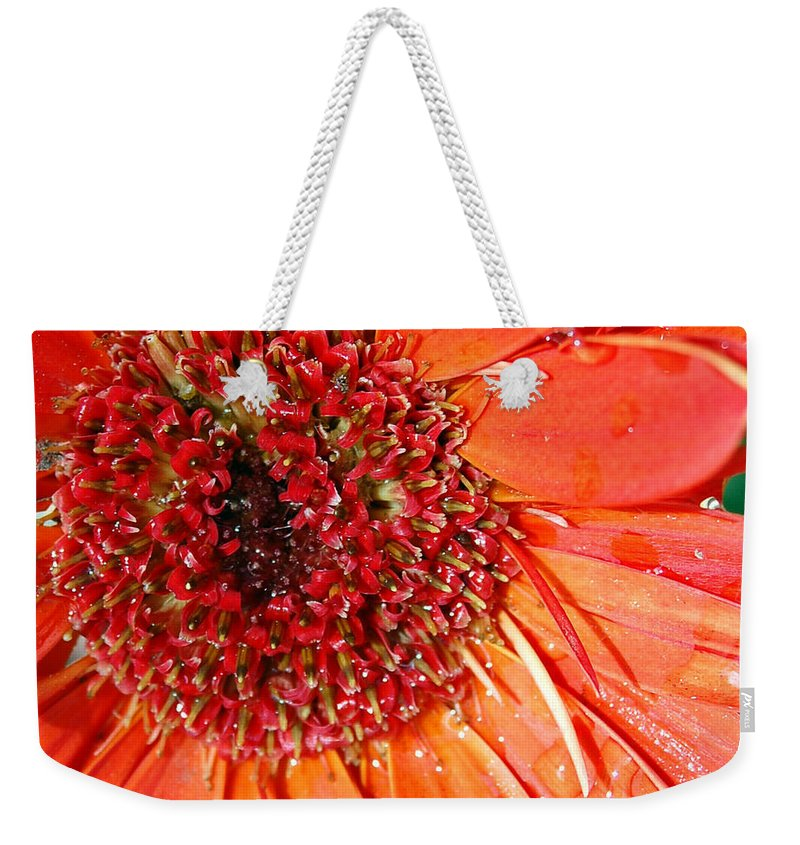 Gerber Daisy Weekender Tote Bag featuring the photograph Red Gerbera Daisy by Amy Fose