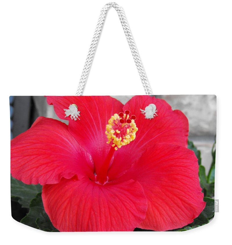 Photography Weekender Tote Bag featuring the photograph Red Hibiscus by Ruth Palmer