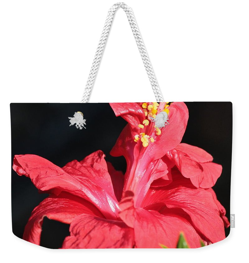 Red Hibiscus Weekender Tote Bag featuring the photograph Red Hibiscus Square 2 by Carol Groenen