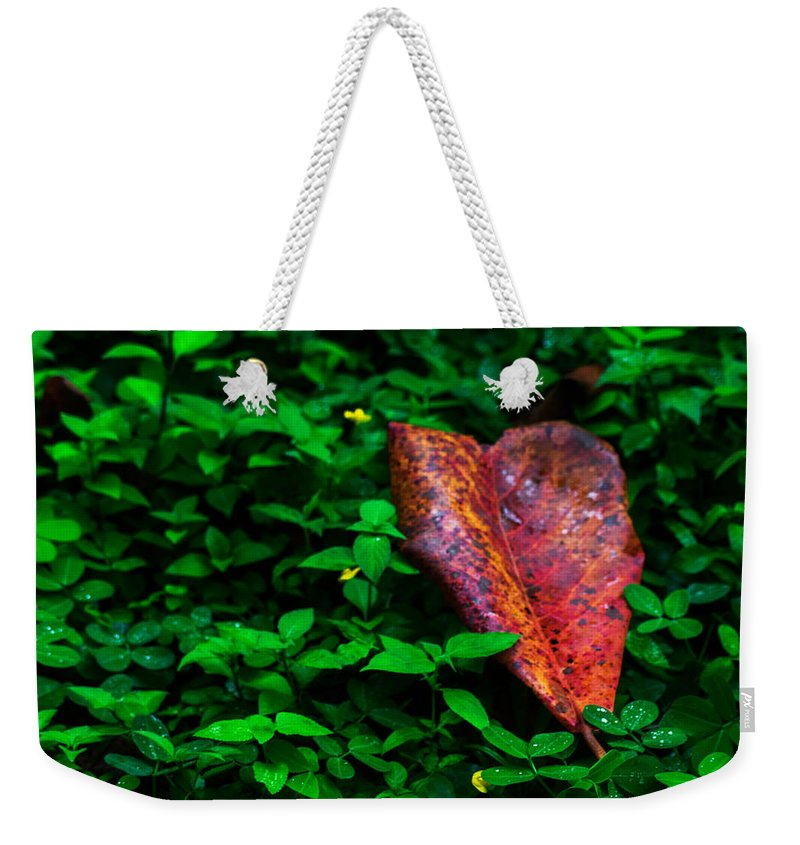 Raindrops Weekender Tote Bag featuring the photograph Red Leaf by Totto Ponce