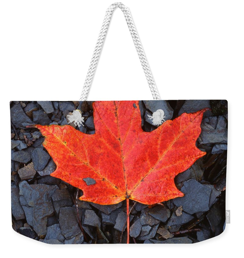 Black Shale Weekender Tote Bag featuring the photograph Red Maple Leaf On Black Shale by John Harmon