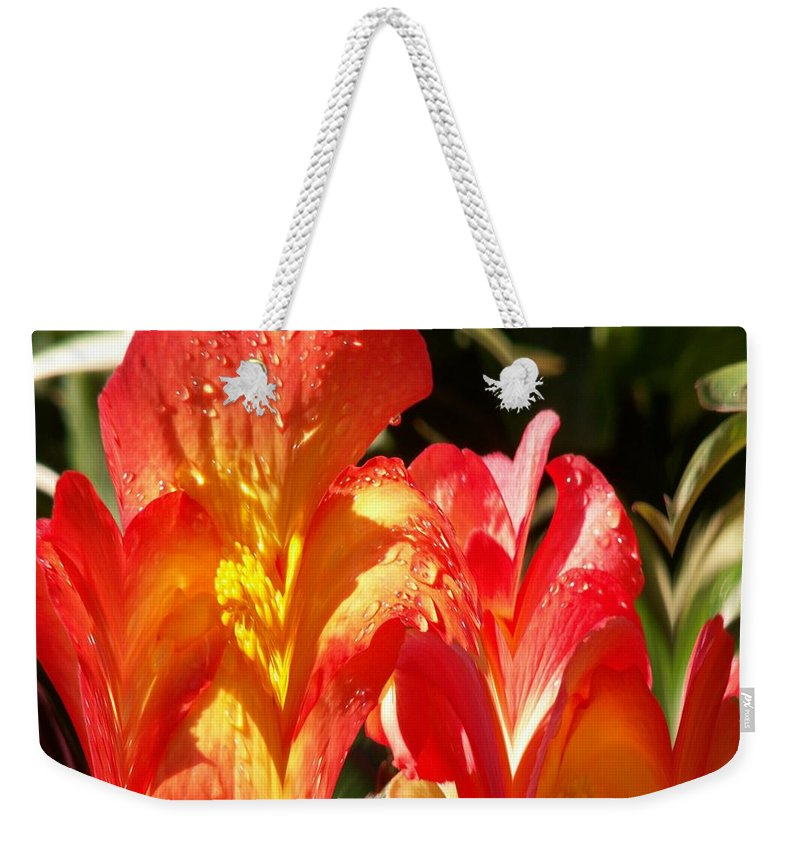 Flowers Weekender Tote Bag featuring the photograph Red N Yellow Flowers 2 by Tim Allen