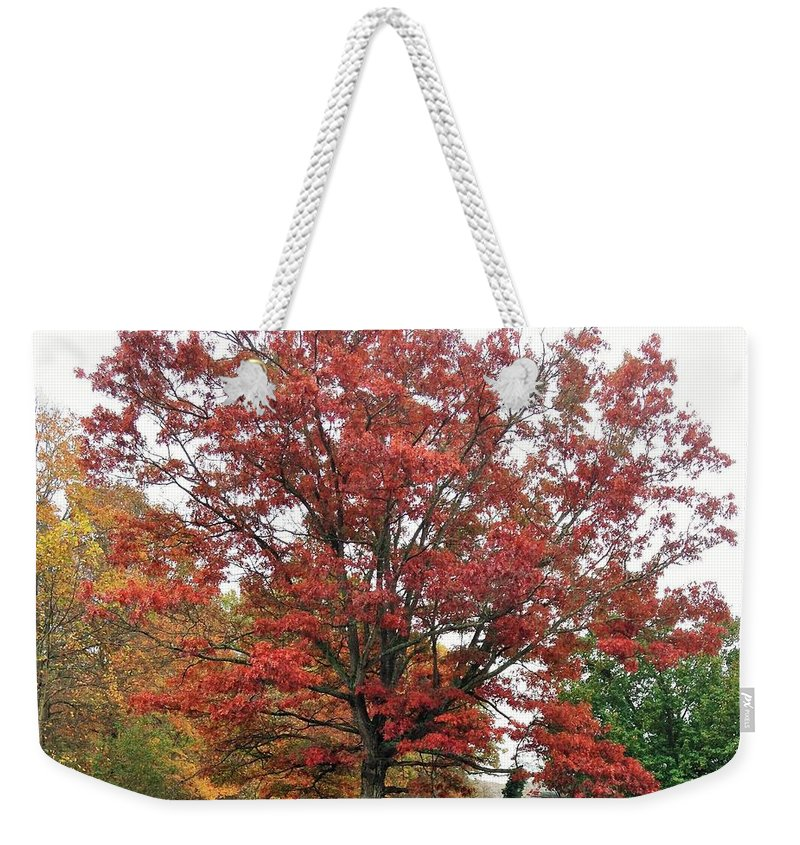 Weekender Tote Bag featuring the photograph Red Oak 2 by Susan Jenkins