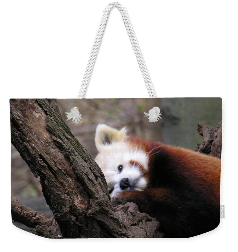 Red Weekender Tote Bag featuring the photograph Red Panda by Diane Greco-Lesser