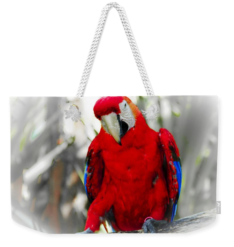 Brevard Zoo Weekender Tote Bag featuring the photograph Red Parrot by Roger Wedegis