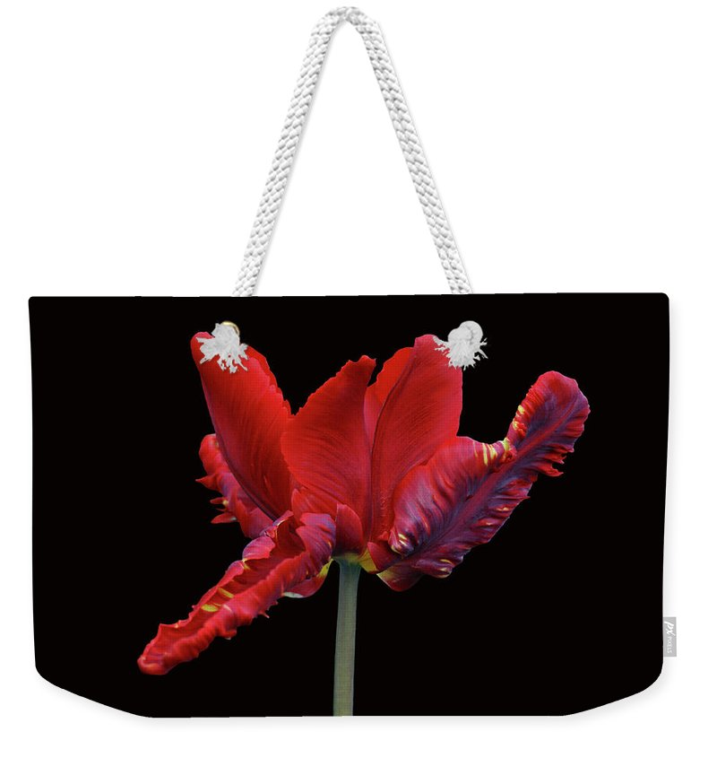 Tulip Weekender Tote Bag featuring the photograph Red Parrot Tulip by Sandy Keeton