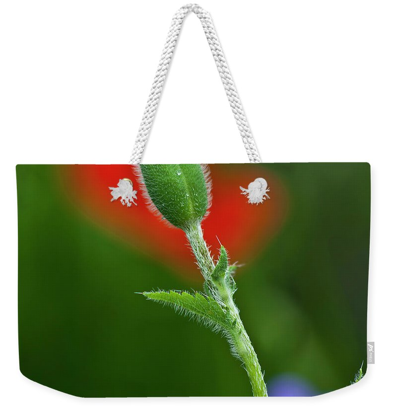 Poppy Weekender Tote Bag featuring the photograph Red Poppy Bud by Heiko Koehrer-Wagner