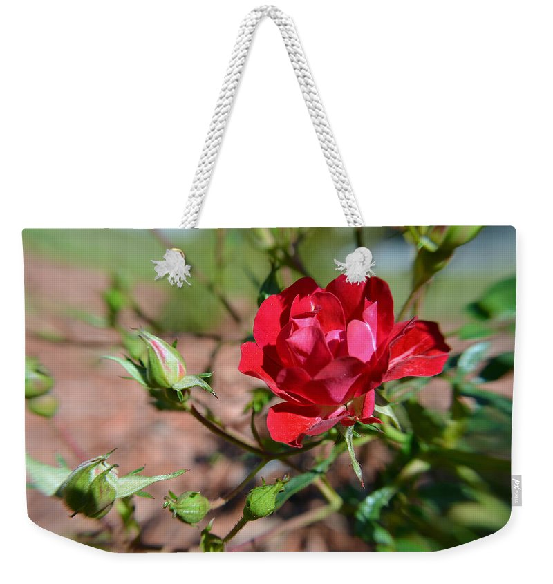 Rose Weekender Tote Bag featuring the photograph Red Rose And Buds by Aimee L Maher ALM GALLERY