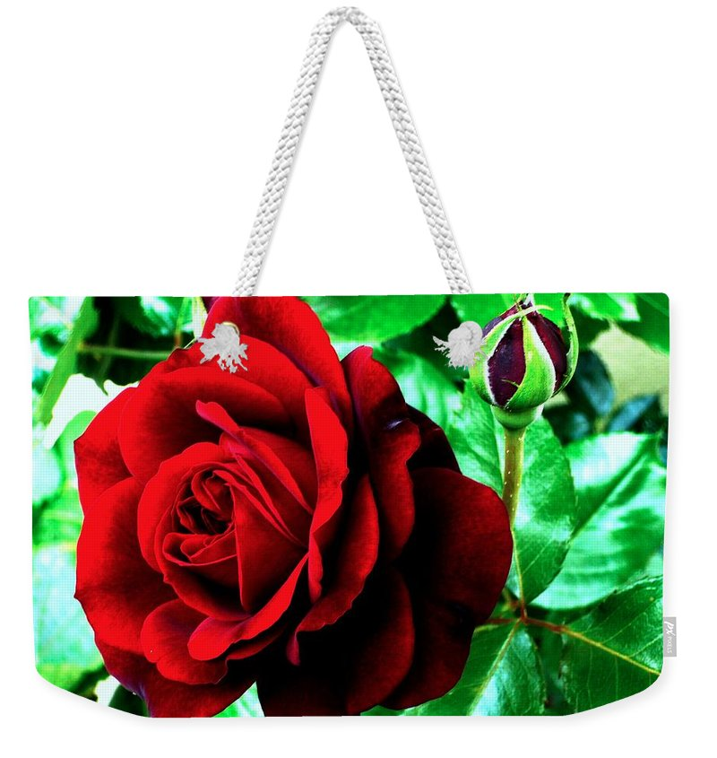 Weekender Tote Bag featuring the photograph red Rose by Helmut Rottler