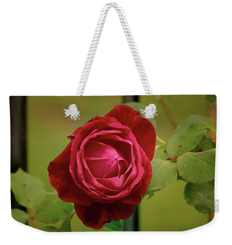 Floral Weekender Tote Bag featuring the photograph Red Rose by John Straton