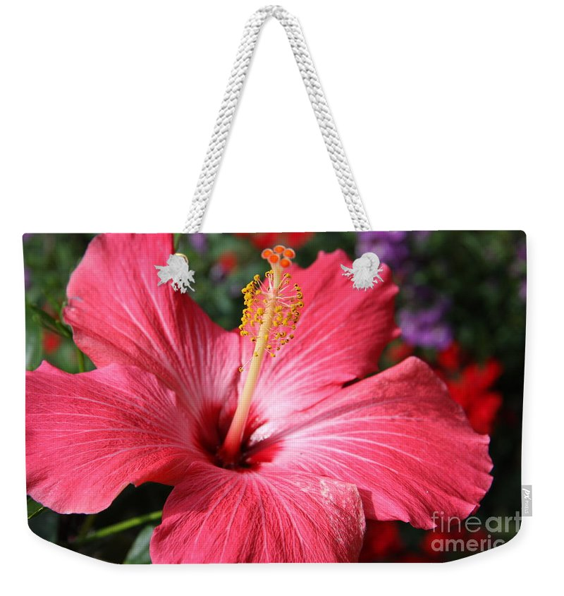Hibiscus Weekender Tote Bag featuring the photograph Red Rose Of Sharon by Christiane Schulze Art And Photography