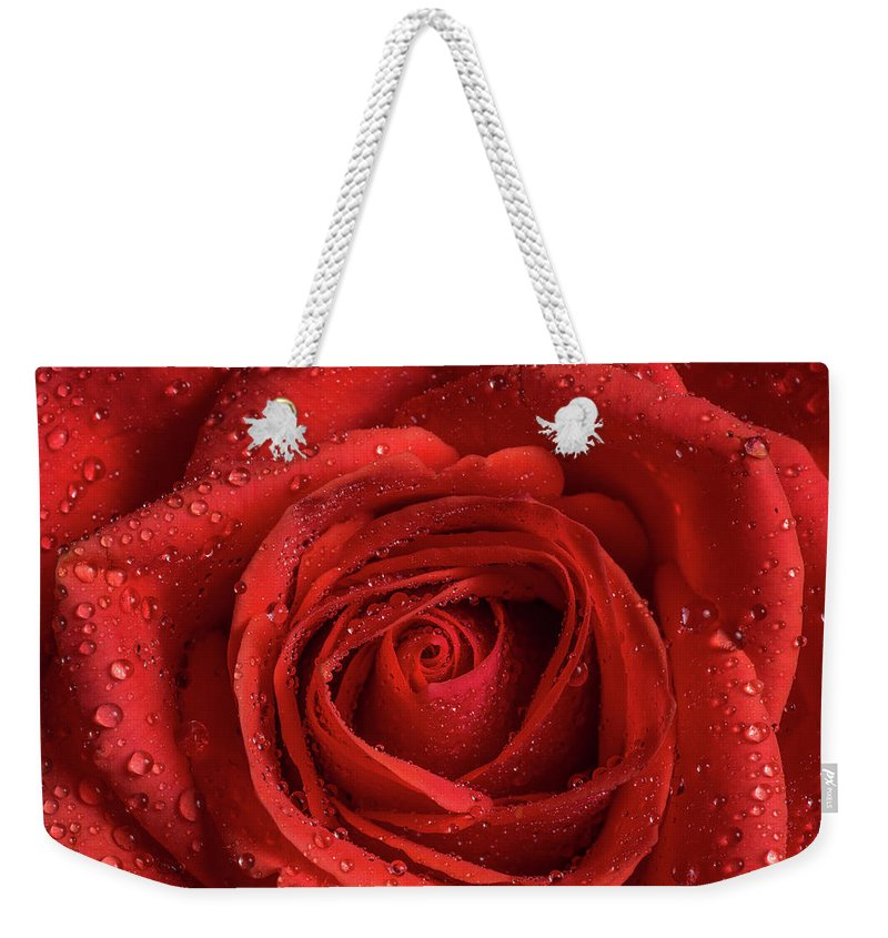 Rose Weekender Tote Bag featuring the photograph Red Rose by Ognian Setchanov