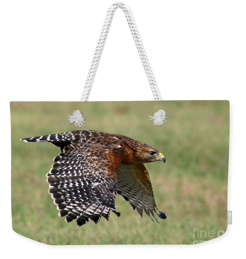 Birds Weekender Tote Bag featuring the photograph Red-shouldered Hawk Flight by Myrna Bradshaw