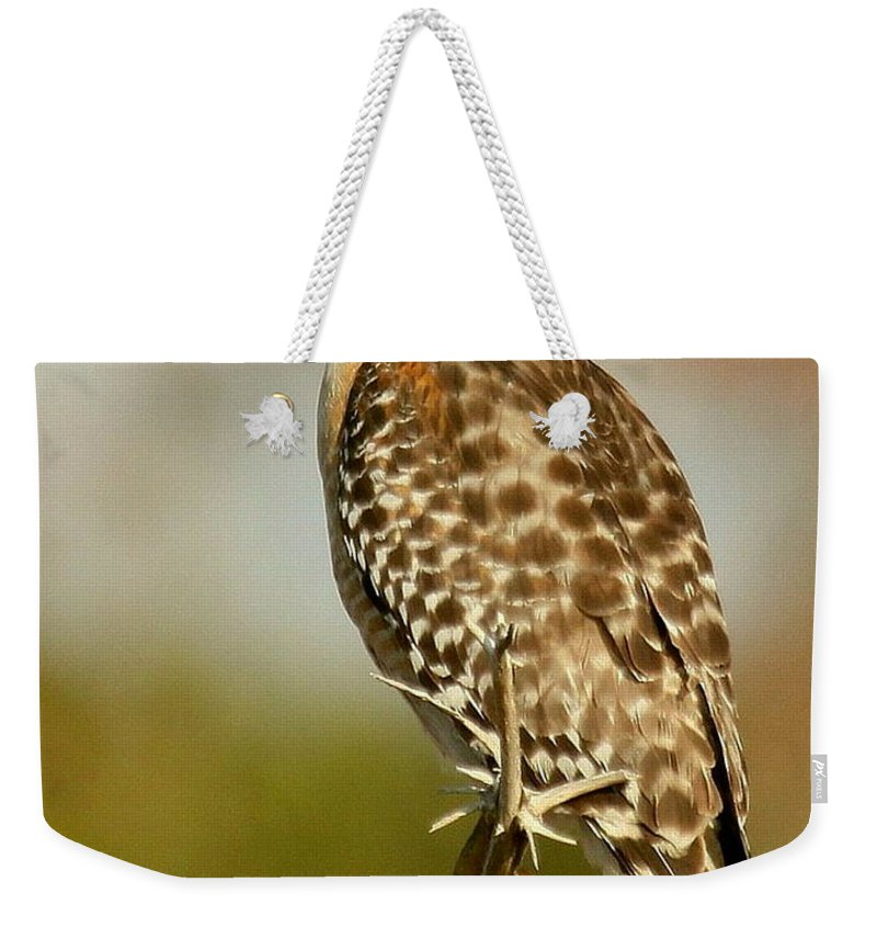 Birds Weekender Tote Bag featuring the photograph Red-shouldered Hawk by Myrna Bradshaw