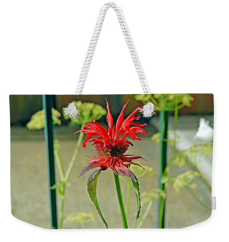 Red Weekender Tote Bag featuring the photograph Red Spider by Robert Meyers-Lussier