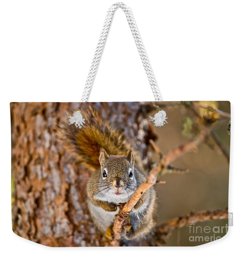 Red Squirrel Weekender Tote Bag featuring the photograph Red Squirrel Pictures 144 by World Wildlife Photography