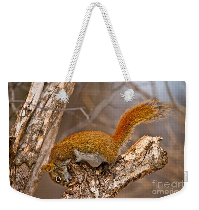 Red Squirrel Weekender Tote Bag featuring the photograph Red Squirrel Pictures 145 by World Wildlife Photography