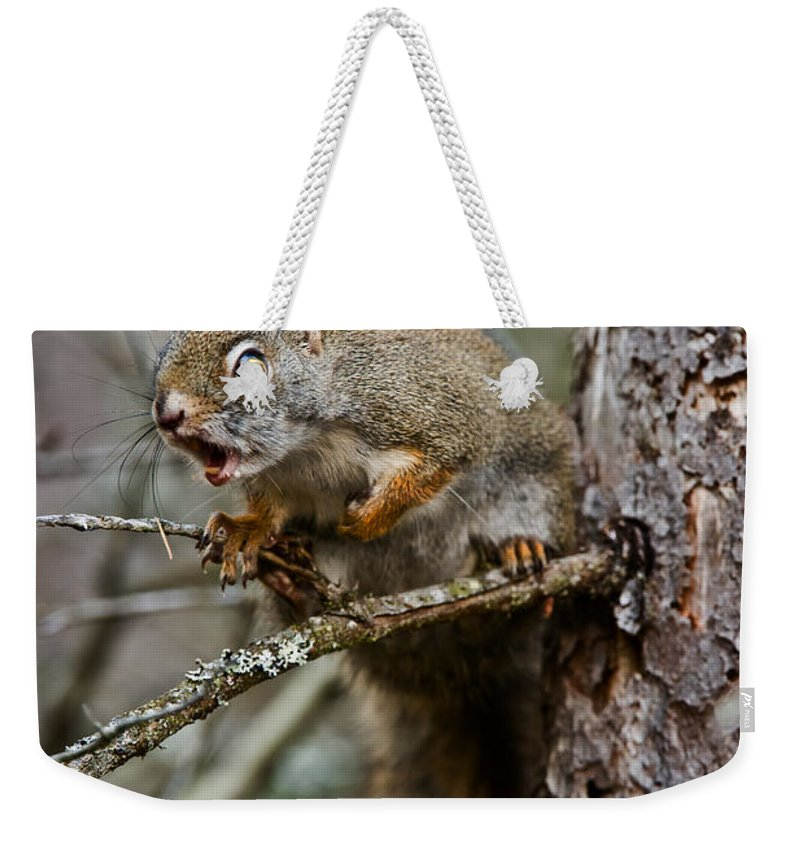 Red Squirrel Weekender Tote Bag featuring the photograph Red Squirrel Pictures 161 by World Wildlife Photography