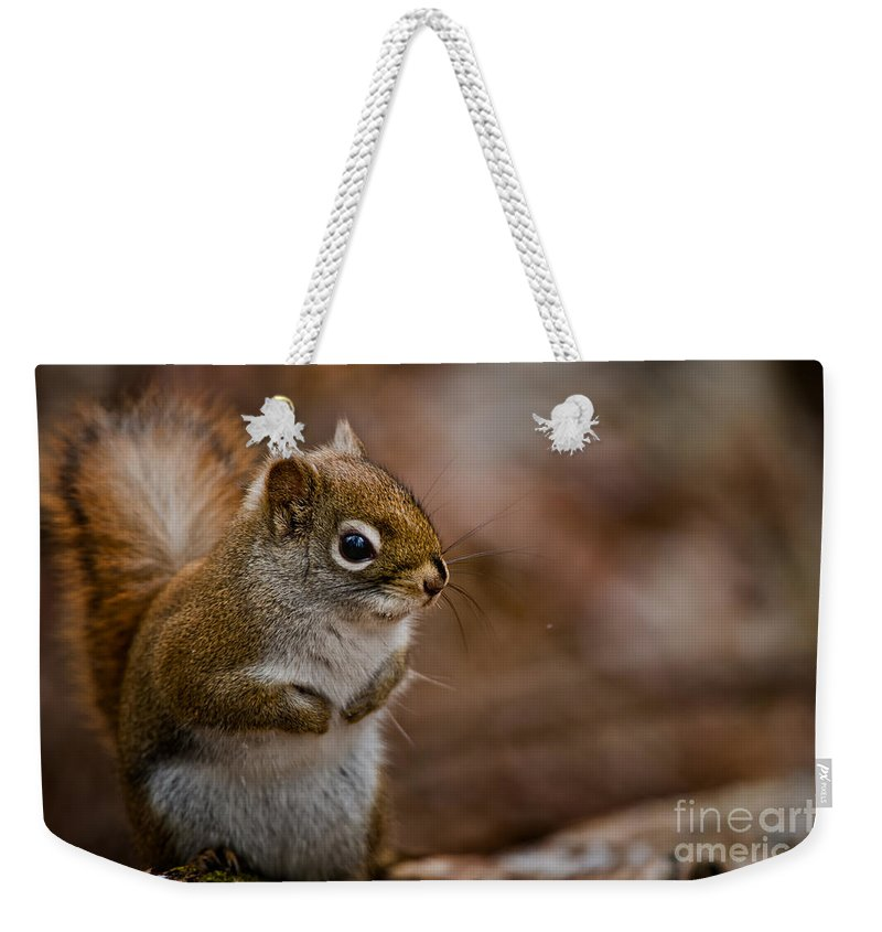 Red Squirrel Weekender Tote Bag featuring the photograph Red Squirrel Pictures 170 by World Wildlife Photography