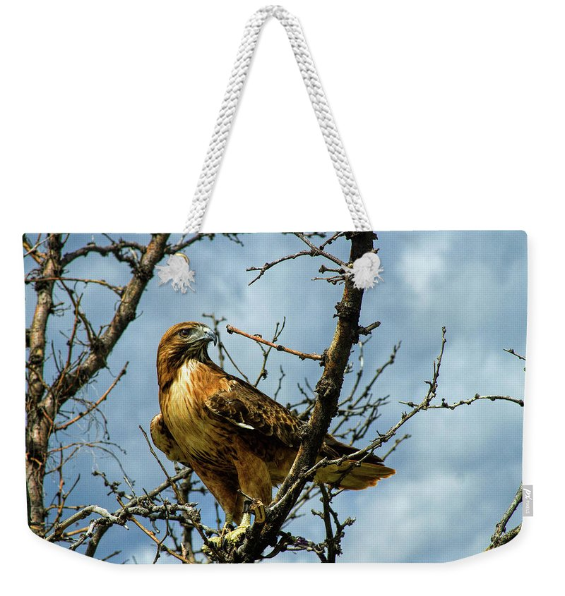 Hawk Weekender Tote Bag featuring the photograph Red-Tailed Hawk by Alana Thrower