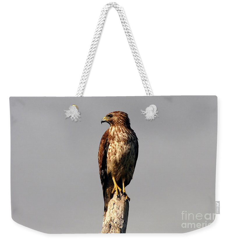Red Tailed Hawk Weekender Tote Bag featuring the photograph Red Tailed Hawk by David Lee Thompson