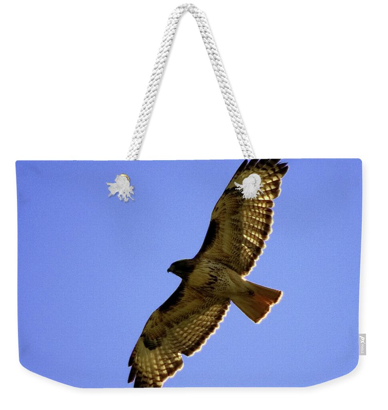 Red-tailed Hawk Weekender Tote Bag featuring the photograph Red-tailed Hawk by Mark Ivins