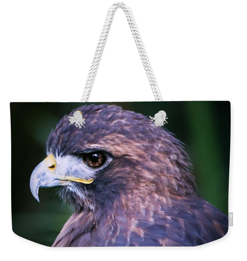 Brevard Zoo Weekender Tote Bag featuring the photograph Red Tailed Hawk by Roger Wedegis