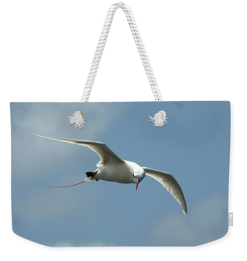 Birds Weekender Tote Bag featuring the photograph Red-tailed Tropicbird - Kauai by Jim Bourne