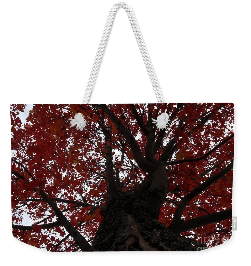Fall Weekender Tote Bag featuring the photograph Red Tree by David Lee Thompson