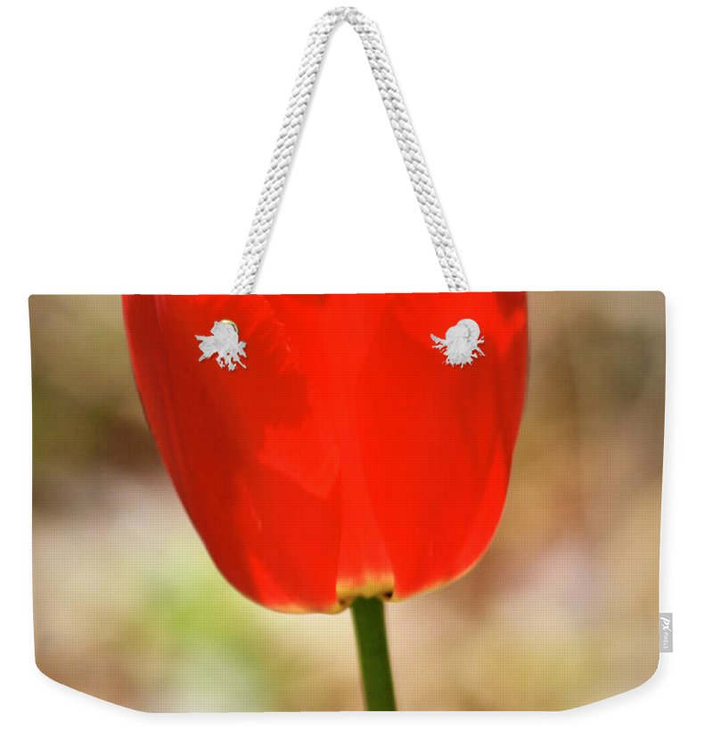 Tulip Weekender Tote Bag featuring the photograph Red Tulip by Teresa Mucha